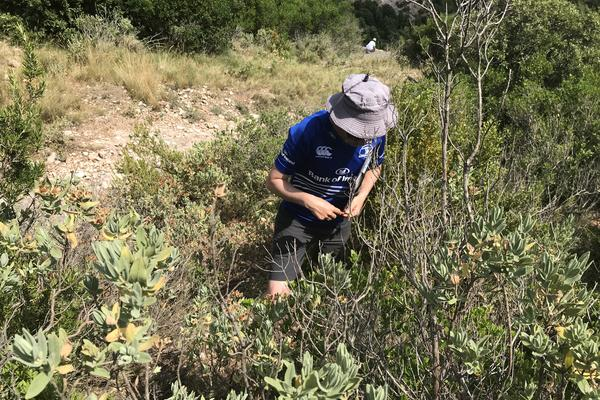 rob measuring vital rates in an individual of cistus albidus catalonia spain credit r salguero gomez