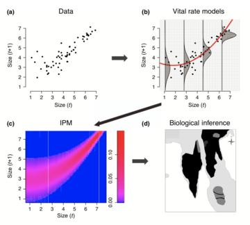 workflow for integral projection models ipms merow et al 2014 mee